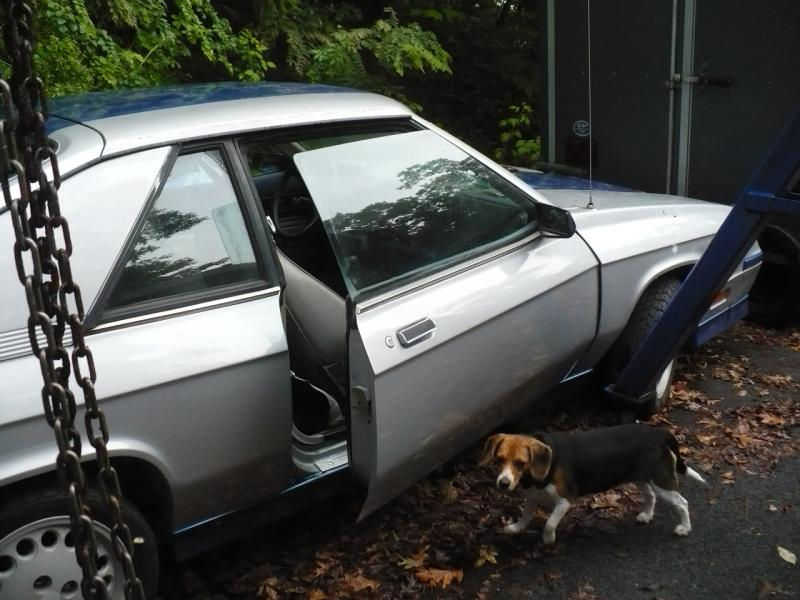 1983 Dodge SHELBY CHARGER - $00.00 / BO-shelby-002.jpg